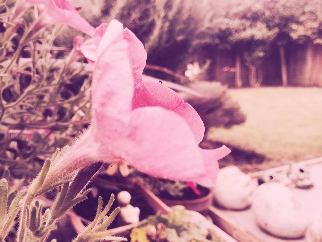 flower_20_09_2014